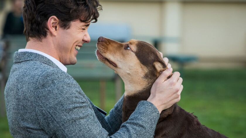 """Jonah Hauer-King costars in the 2019 tale """"A Dog's Way Home."""""""