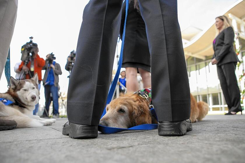 Henry rests during a news conference Wednesday at which the Orange County district attorney's office announced charges against his previous owner.