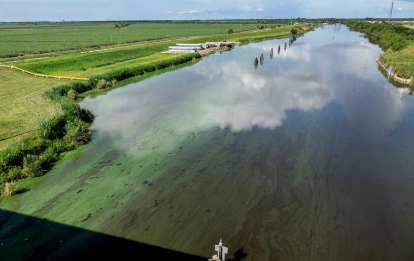 """Los gobiernos federal y estatal acordaron hoy una inversión de 50 millones de dólares para """"reparaciones críticas"""" del dique que rodea el lago Okeechobe en Florida, cuyo mal estado ha obligado a realizar descargas contaminadas a ríos y estuarios para evitar su desbordamiento. EFE/ARCHIVO"""