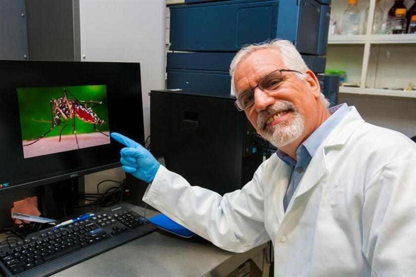 Vista de un científico del Instituto Politécnico Nacional (IPN) de México, que investiga el diseño de anticuerpos neutralizantes como bioterapéuticos para combatir el virus del chikunguña. EFE/IPN/SOLO USO EDITORIAL