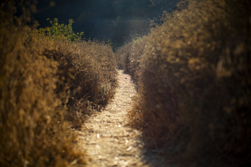 A narrow dirt trail leads hikers back toward Rose Hill Park.