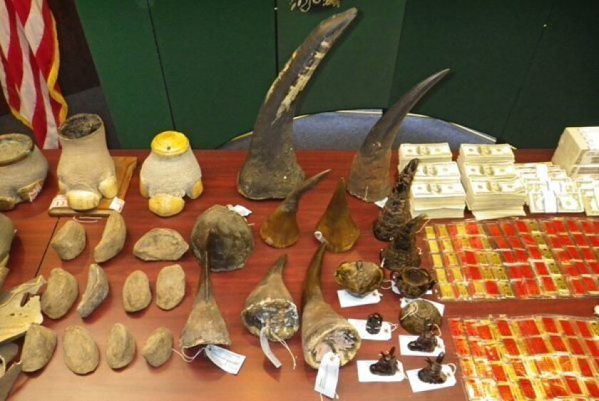 A father and son have been sentenced to prison in a rhino horn trafficking case. Above, federal wildlife agents seized more than $2 million in cash, gold bars and precious stones, along with rhino horns, hoofs and other body parts, while breaking up an international smuggling ring in February 2012.
