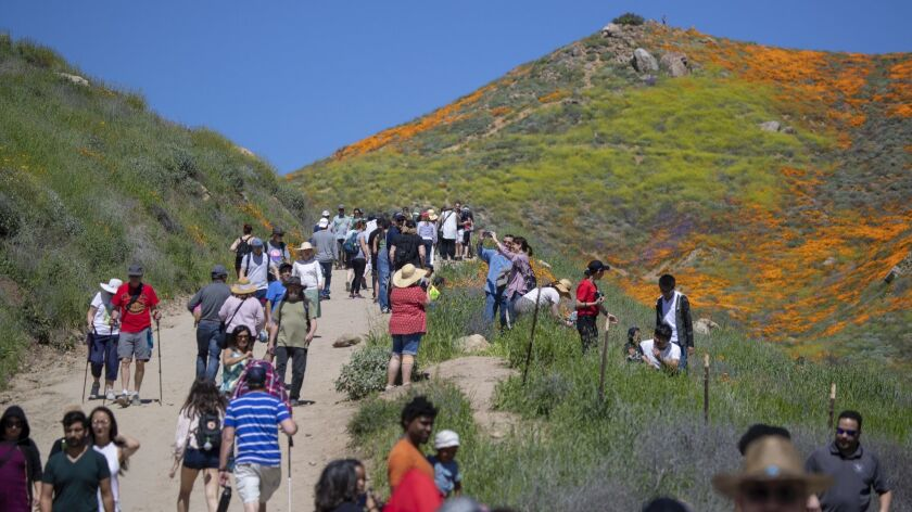LAKE ELSINORE, CALIF. -- MONDAY, MARCH 18, 2019: Large crowds fill the path to view the super bloom