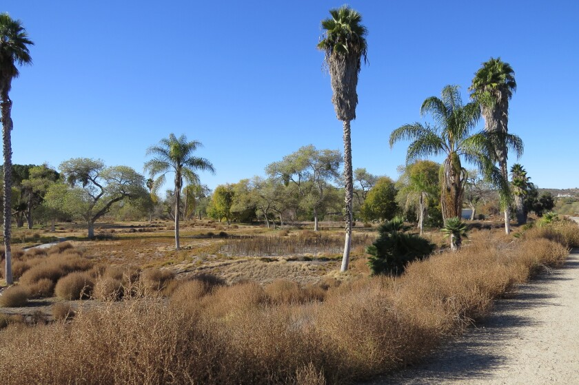Part of the northern section of the old San Luis Rey Downs golf course in Bonsall purchased by the county to become part of the nine-mile long San Luis Rey River park