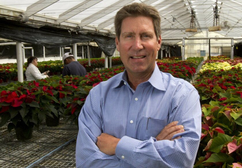 Paul Ecke III, who last year sold his nearly 100-year-old family poinsettia farming business, is winding down his role at the Encinitas company and sorting through its archives.