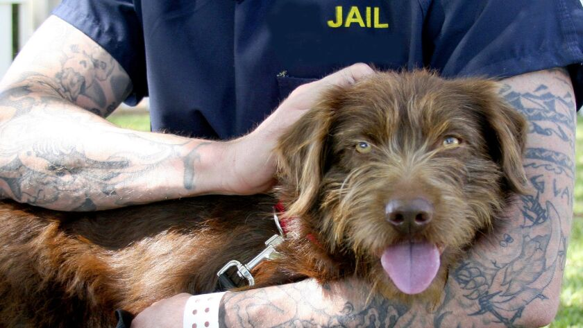 An inmate with the dog he's training for Cell Dogs. (Courtesy of Cell Dogs)