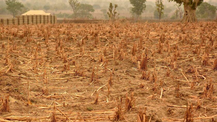 A barren wheat field in Maiduguri, Nigeria, on March 14, 2017.