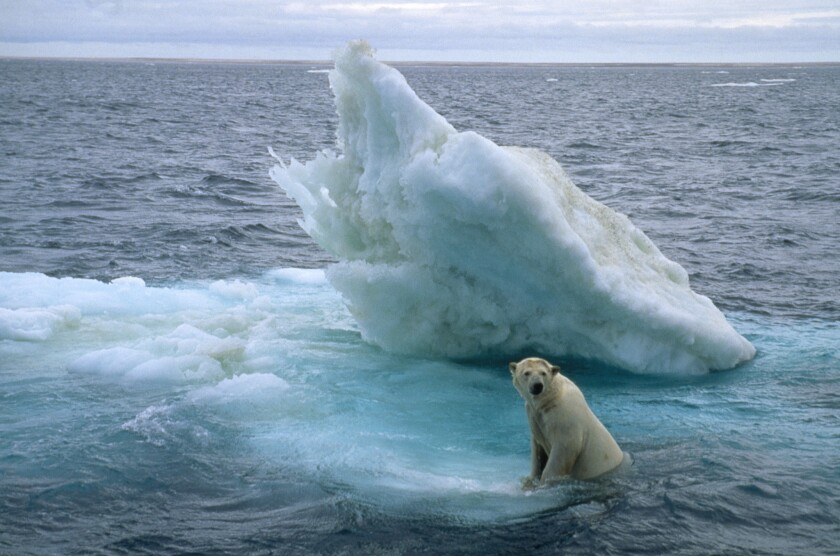 "A polar bear takes refuge on an ice floe in an image from the movie ""Arctic Tale."""