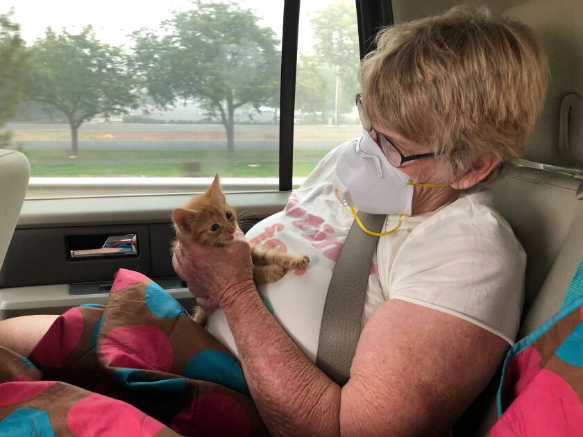 Wildfire evacuee Susie McMillan, 76, cradles a kitten she rescued after visiting the remains of her Phoenix, Ore., home.