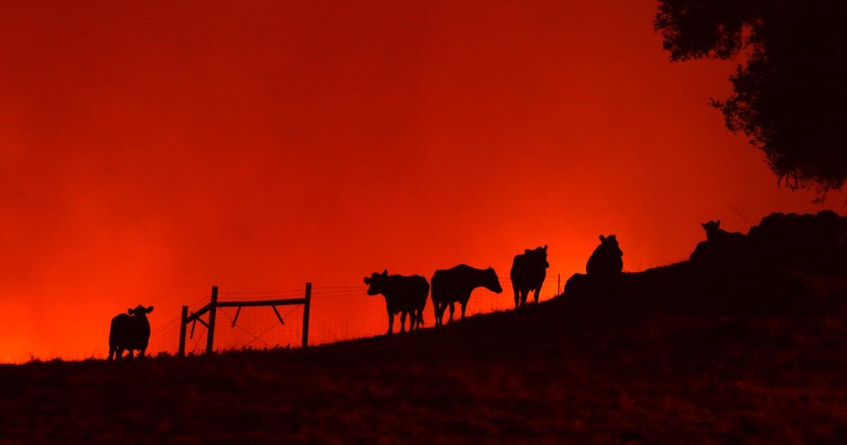 Ενημερωτικό δελτίο: Βασικές Καλιφόρνια Εβδομάδα σε Αναθεώρηση: Πυρκαγιές και διακοπές ρεύματος