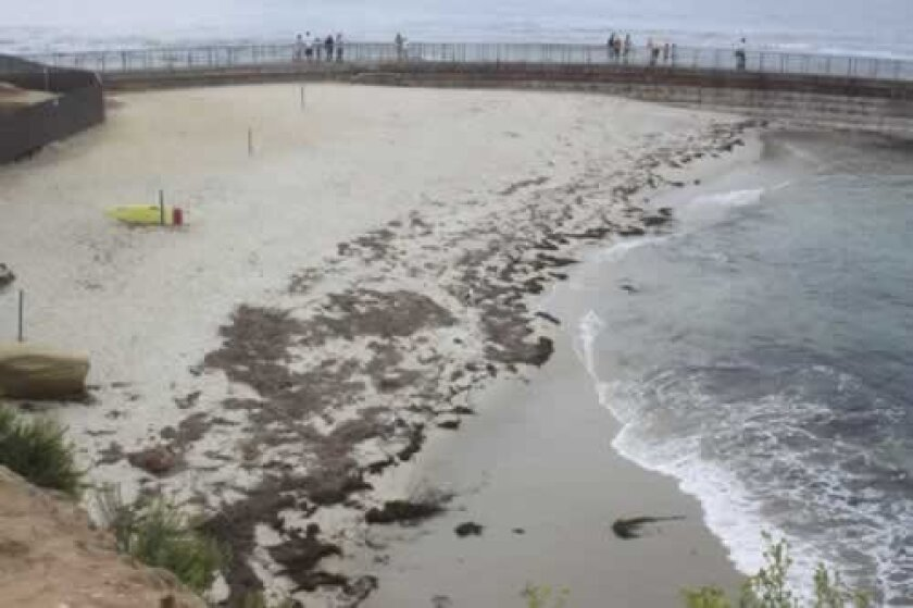 Wrack — described as anything that washes up on shore, including kelp — continues to accumulate at La Jolla's Children's Pool. Ashley Mackin