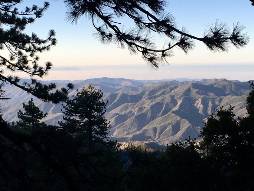 The peaks of Los Padres National Forest are seen from amid the greenery on Pine Mountian