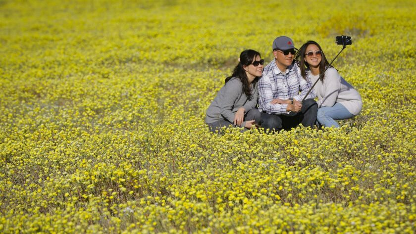 Michelle Han, left, her husband, Thomas, Han, center, and their daughter, Ashley Han, right, from 4S Ranch take a selfie photo of themselves while in a bed of wildflowers off DiGiorgio Road north of Borrego Springs.