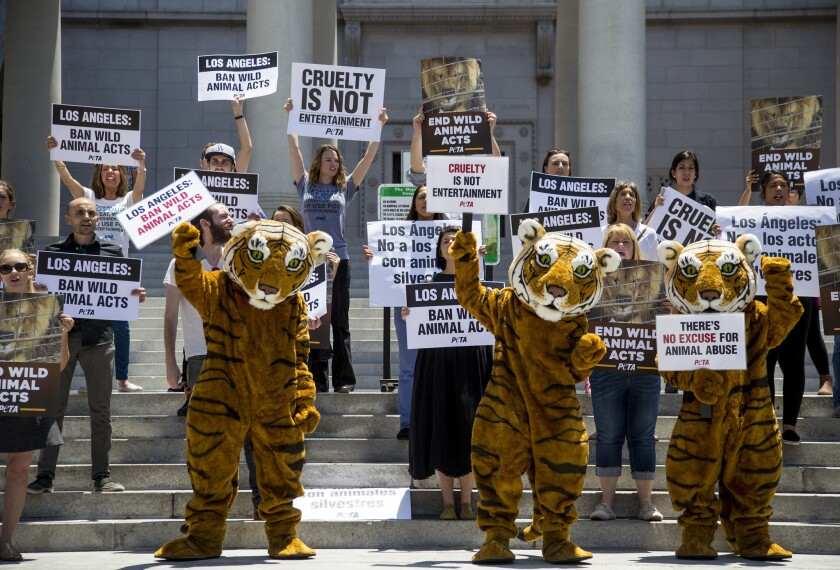 People protest against the use of tigers, lions and other wild animals in circuses