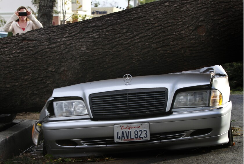 A car smashed by a fallen tree in Arcadia after strong winds in the San Gabriel Valley in December 2011.