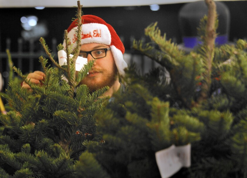 Glendale resident Adam Oakes shops for a tree at Mr. Snowman Christmas Trees in Glendale.