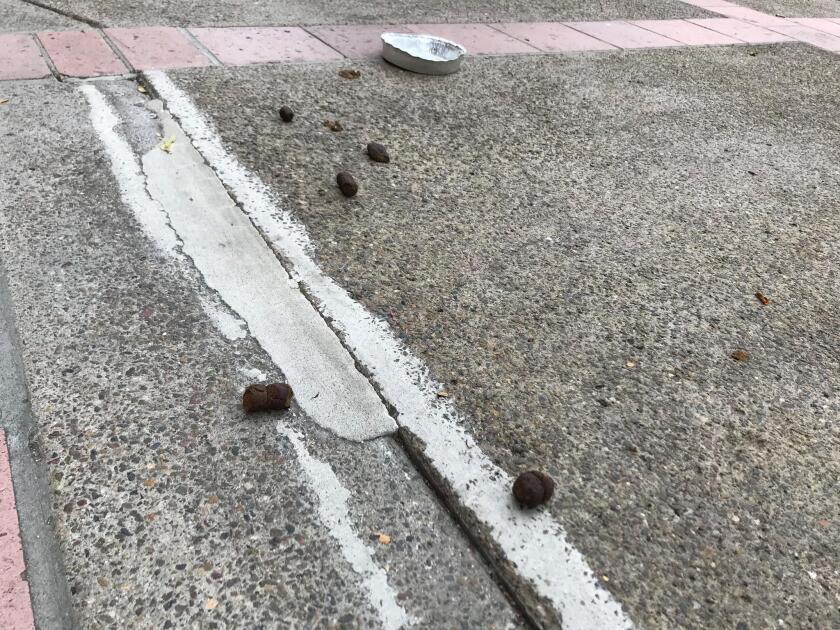 Dog feces is seen in front of a fine-art gallery on Prospect Street in La Jolla.
