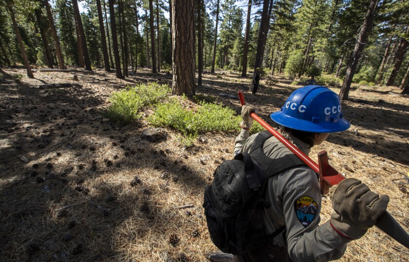 California Conservaton Corps in Lake Tahoe