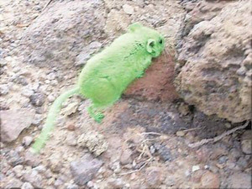 quest-green