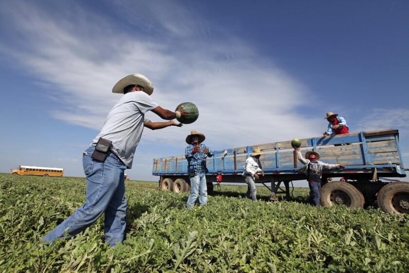 EEUU: Empresarios redoblan esfuerzos en favor de los migrantes