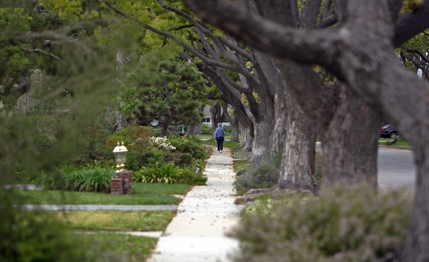 Mature trees line the street in Park Estates in Long Beach.