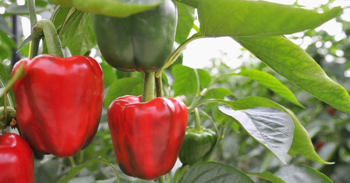 April chores for home gardeners