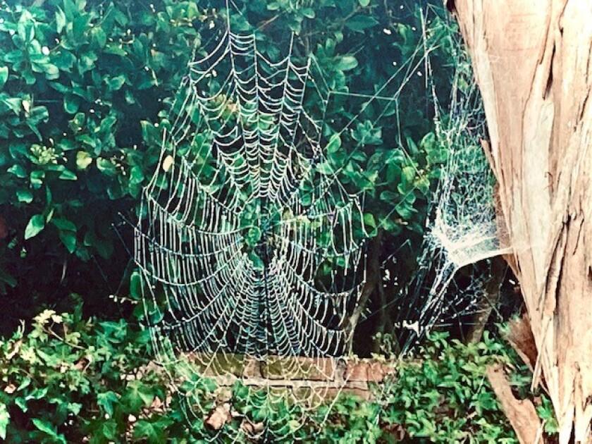 Inga's husband, Olof, considers spider webs like this to be engineering marvels.