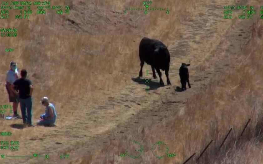A paramedic stands with two people injured while running from a cow in a Solano County park Sunday.