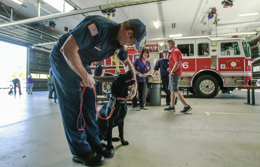 Fire Department Therapy Dog