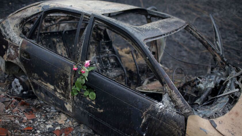 Roses were placed on the burned-out remains of a car in which a woman died after it ran off the N-326-1 highway near Pedrogao Grande in central Portugal on June 19, 2017.