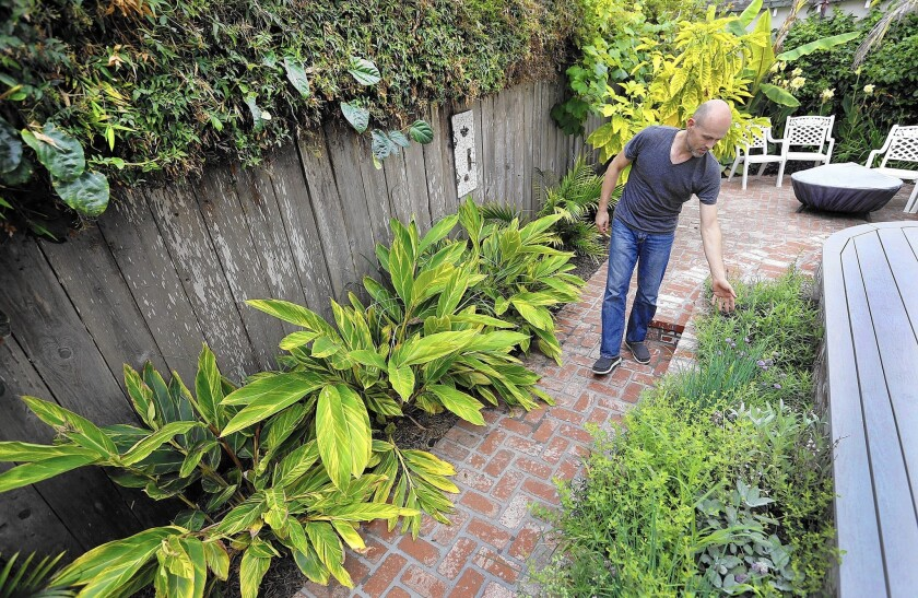 Cameron Clark walks through his back patio, where bananas, guava, passion fruit, ginger and an herb garden are fed by water diverted from his clothes washer in his 1905 Victorian farmhouse in Santa Barbara.