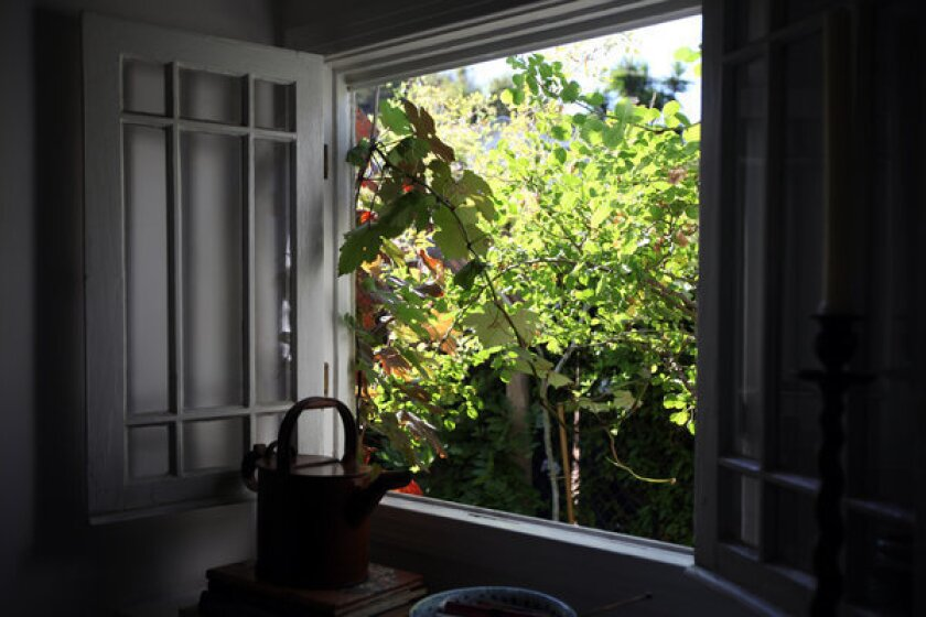 Judy Horton's living room windows look out onto grapevines and other plants, a painting-like composition that makes the house on the other side of the fence practically disappear.