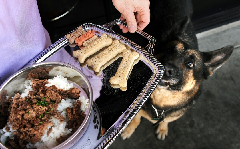 Pelle, a German sheperd, is served a meal of chopped hamburger meat with rice and an assortment of milk bones on the patio at The Morrison.