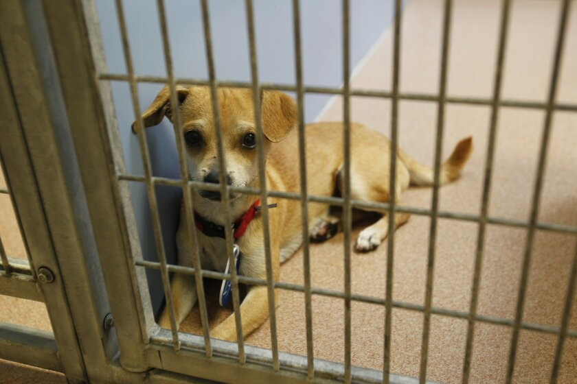 Several days after Fourth of July, dogs that aren't reclaimed at the county Animal Shelters are up for adoption. Dozens of dogs who were lost during or following Monday's fireworks were brought to shelters around the county. File photo from 2014.