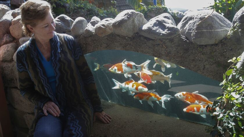 Kelly Van Jen watches koi fish through a window in a koi pond at KoiLand in Vista Wednesday. photo b