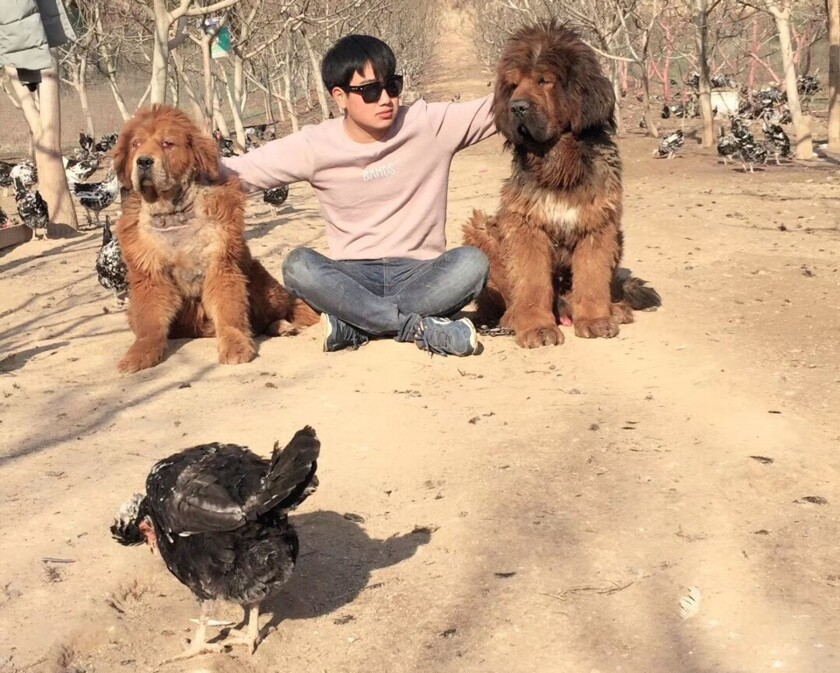Shang Yukang on his chicken farm