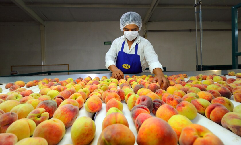 Divine Flavor's fruit dispatch in Hermosillo.JPG
