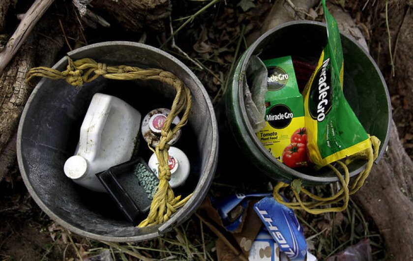 Buckets containing fertilizer, pesticides and rat poison sit in an encampment used by marijuana growers in an illegal operation in the Sierra Nevada foothills. Poisons used by growers have been linked to the deaths of fishers, a rare forest animal in the southern Sierra.