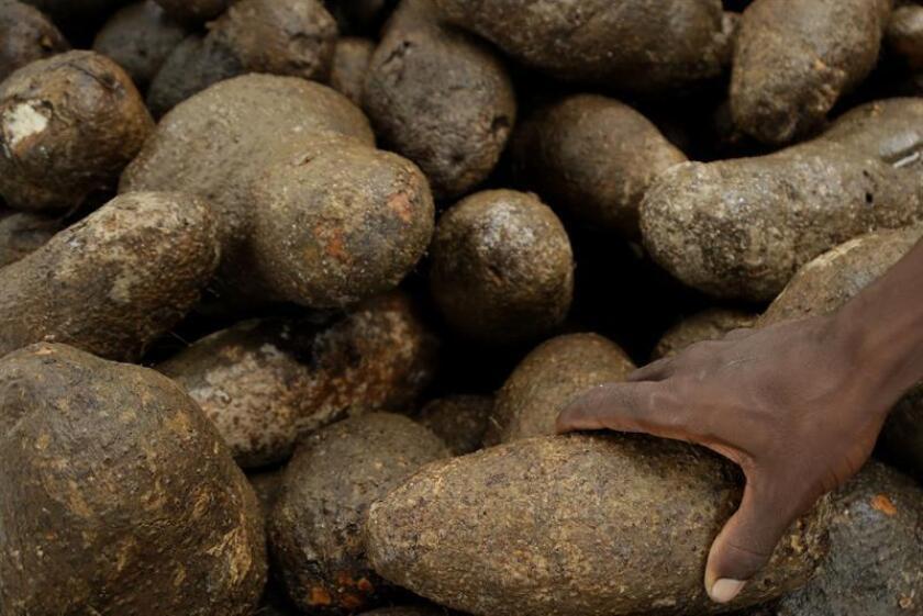 La FAO llamó a promover un debate para impulsar un mayor consumo de productos locales frescos que reemplacen a los alimentos altamente procesados, la agricultura familiar, los programas de protección social y la adaptación al cambio climático. EFE/Archivo