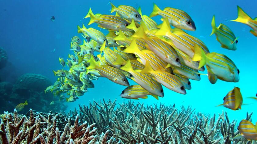 No The Great Barrier Reef In Australia Is Not Dead But It