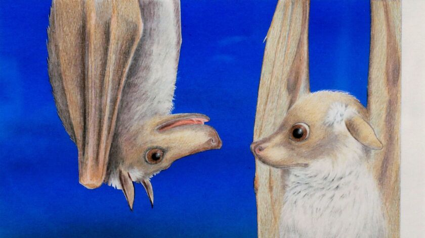 """Detail view of artwork at Carlsbad Library's gallery by artist Janell Cannon from her best selling children's book """"Stellaluna."""""""