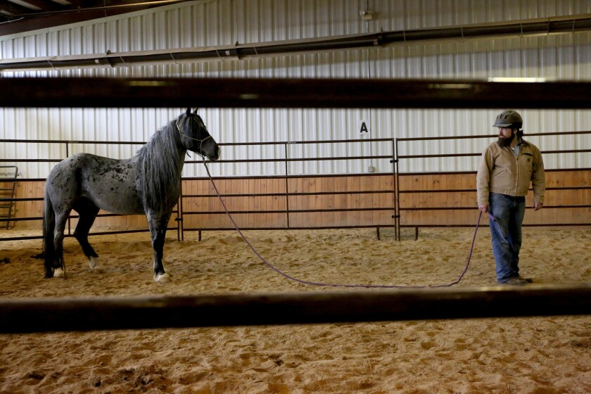 Mitchell Reno works with a wild mustang named Boo-Yah.