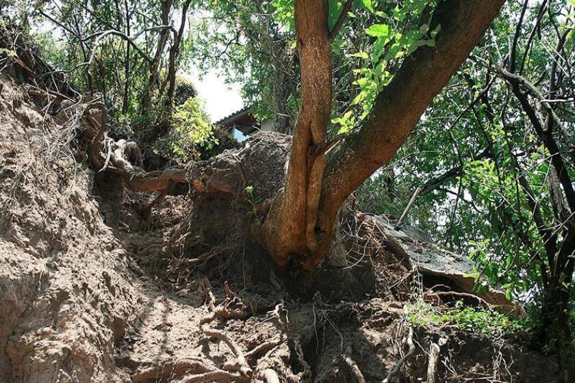 Fotografía del 20 de septiembre de 2018, cedida por la Comisión Nacional Forestal (Conafor), que muestra un árbol en un bosque, en Ciudad de México (México). EFE/CONAFOR/SOLO USO EDITORIAL/NO VENTAS