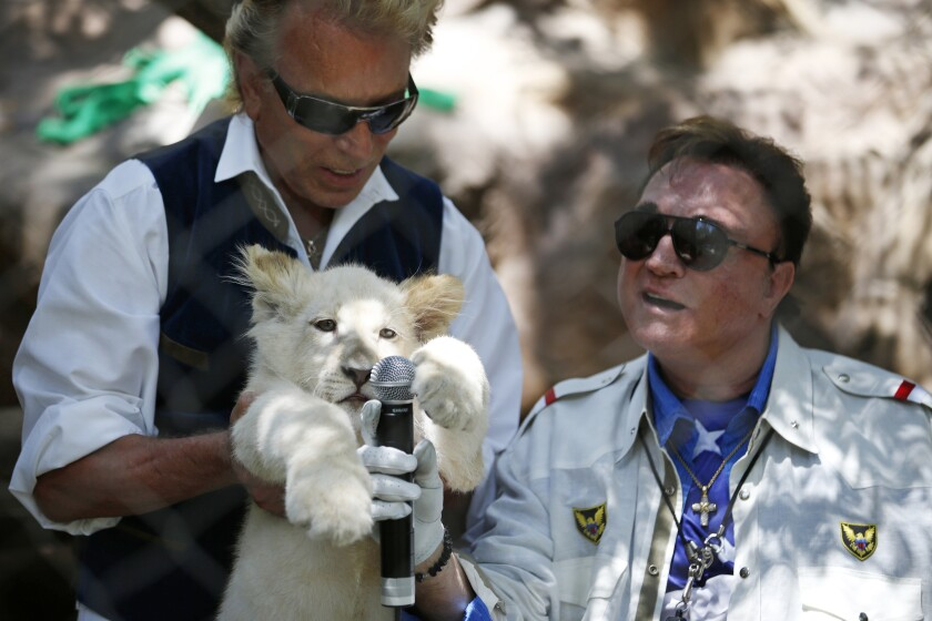 Siegfried Fischbacher holds up a white lion cub. Roy Horn holds up a microphone to the cub.
