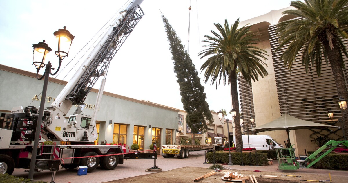 Fashion Island Welcomes A New Tree For The Holidays With Decorating To Follow Los Angeles Times
