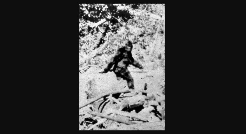 Photographers Roger Patterson and Bob Gimlin made this image Oct. 20, 1967, purportedly showing a female Bigfoot, during a horseback search in northern California for Sasquatch or 'Bigfoot'. Now, one group is suing the state of California to get it to recognize the species.