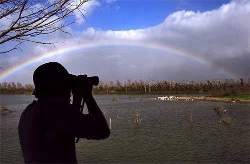 A rainbow forms over Clay Bottom Pond, a wildlife watering hole at the Smith Oaks Bird Sanctuary that once stored High Island's water supply. Aside from hosting various birds such as egrets, blue-winged teals and roseate spoonbills, the man-made pond is home to alligators and turtles.