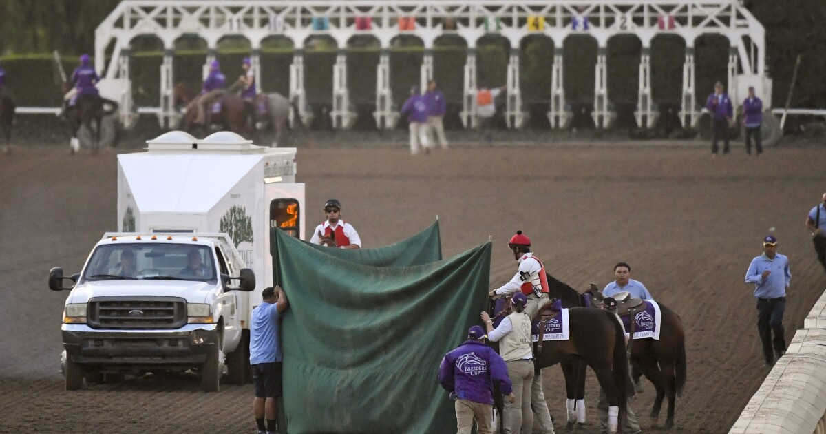 Racing! Last race turns bad for Breeders' Cup
