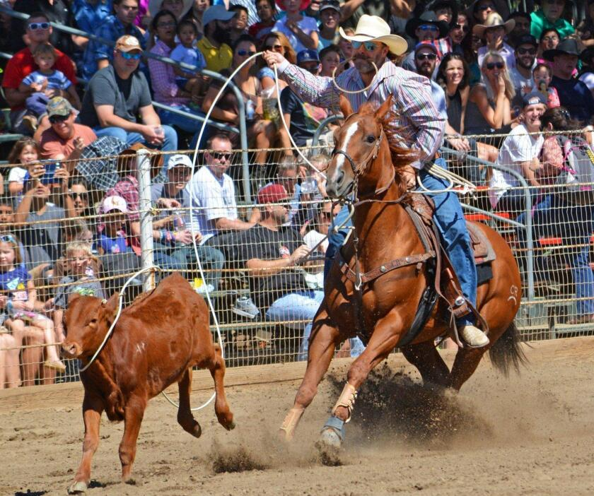 A tie-down roping contestant in the 2016 Poway Rodeo.
