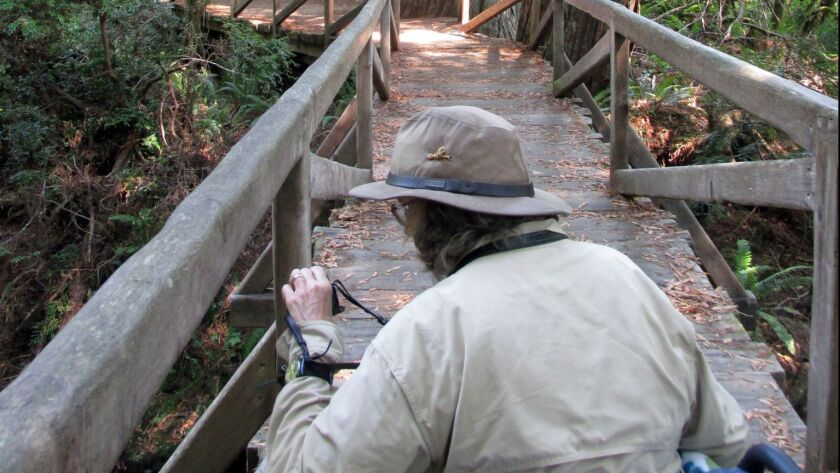 ORICK, CA - SEPTEMBER 9, 2015: Rebecca Fogg takes a photo exploring the Redwood Access Trail at Prai